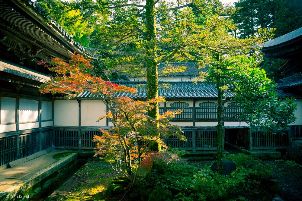 富山県南砺市井波 井波別院 瑞泉寺の中庭