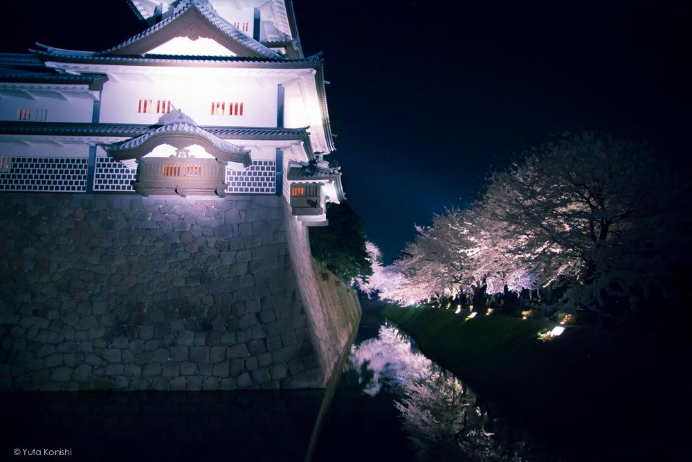 兼六園の夜桜ライトアップ無料公開 (2014年春)