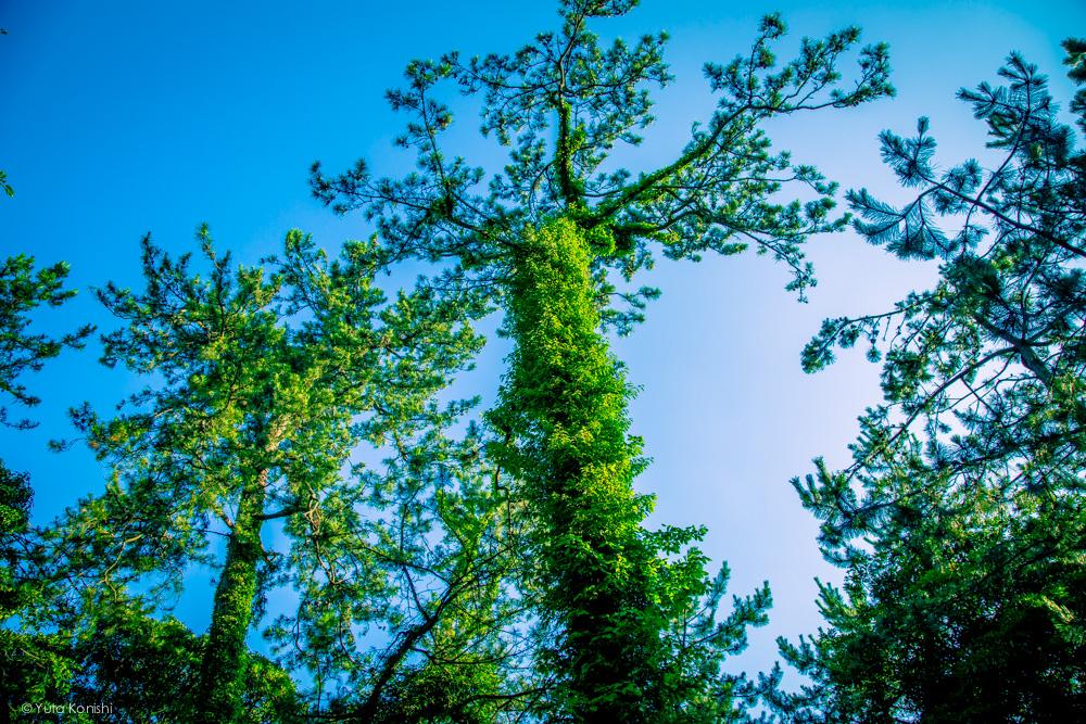 勝尾崎キャンプ場 能登の魅力を惜しげも無く伝える能登の美しい写真たち!こんなの見たら能登へ行きたくなるだろ!これ見て行かないやついるの?
