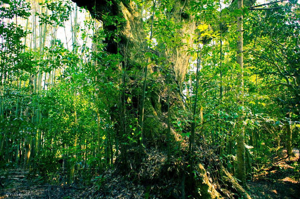 須須神社 能登の魅力を惜しげも無く伝える能登の美しい写真たち!こんなの見たら能登へ行きたくなるだろ!これ見て行かないやついるの?