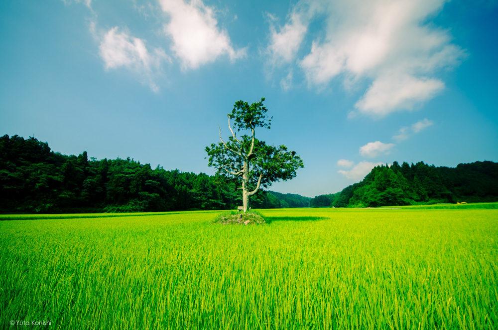 松島キャンプ場 能登の魅力を惜しげも無く伝える能登の美しい写真たち!こんなの見たら能登へ行きたくなるだろ!これ見て行かないやついるの?