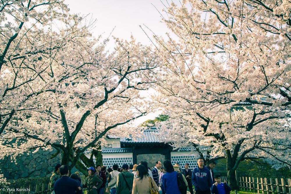 兼六園・金沢城跡でのお花見2015年!もう桜なんか散ってGWだよ!なんだこれ!紺屋坂の団子屋の行列すごかった汗 北陸新幹線効果?いやいや通常らしいです。