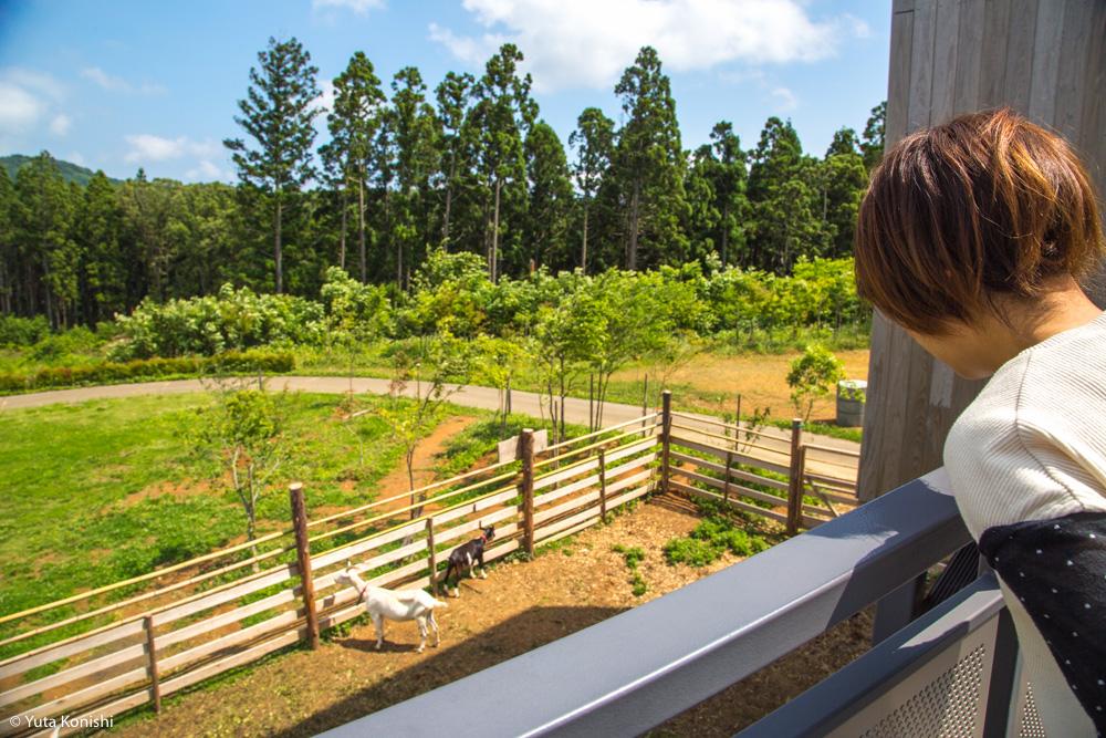 輪島観光完全満喫マニュアル!えっ?!まじ?!金沢から一日でこんなに回れんの?朝市・大沢・千枚田!輪島の魅力を本気で凝縮しました!