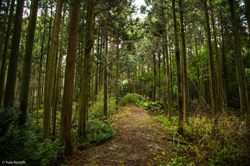 石川県の有名B級珍スポット特集!巨大観音に大仏そしてモーゼの墓が!そこには深い思いがあるから面白いのだ。